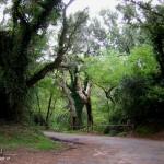 Tutela per il Parco Nazionale del Circeo